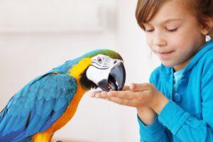 bird girls feed