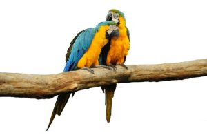 bird snuggle