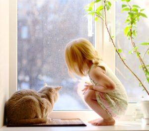 kitty window
