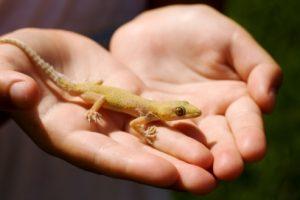 lizard hand