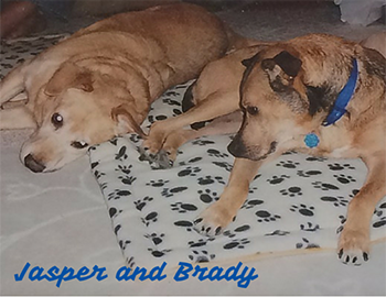 Jasper and Brady with names