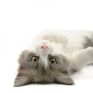 kitty upside