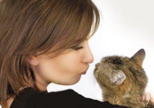 1 kitty kiss