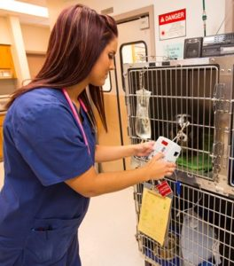 tech monitoring pet after anesthesia