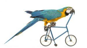bike birdie