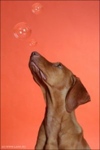 bubble-dog
