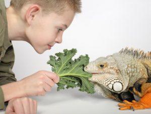 lizard kale