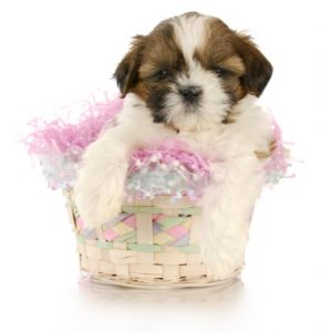 pup basket