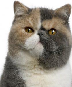 1 kitty look - Copy