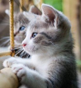 a kitten window - Copy