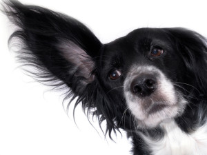 ear problems for pets, countrycare animal complex
