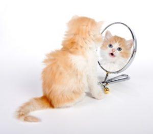 kitty mirror