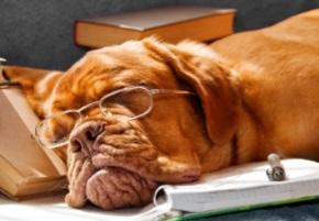 mastiff book