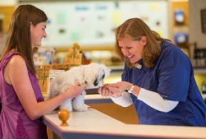 positive veterinary visit