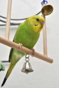 bird on perch