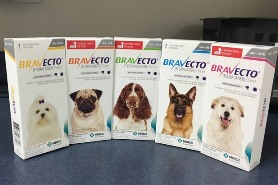 Bravecto for flea prevention