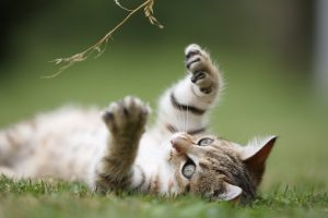 Summer safety tips for pets